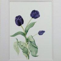 110-tulip