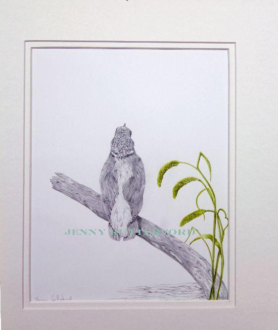 114-kinkfisher