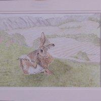 116 hare