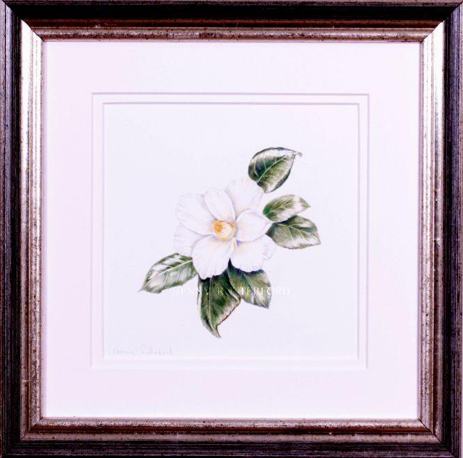 208-camellia