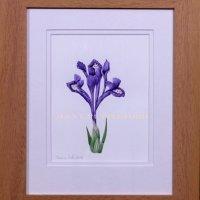 222-mini-iris