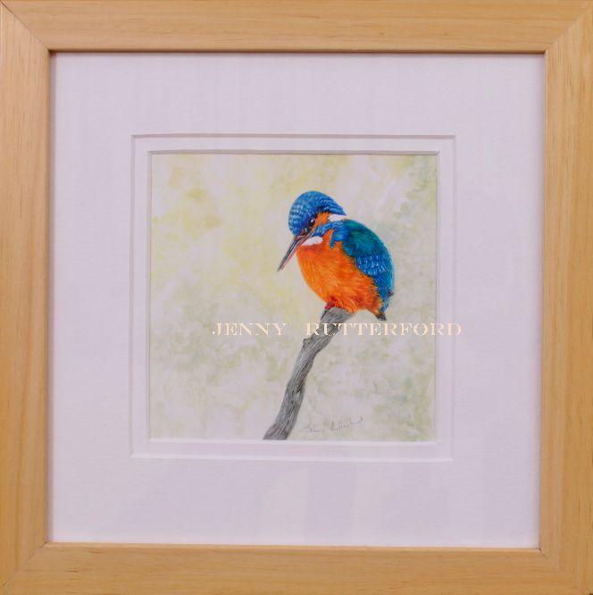 230 kingfisher