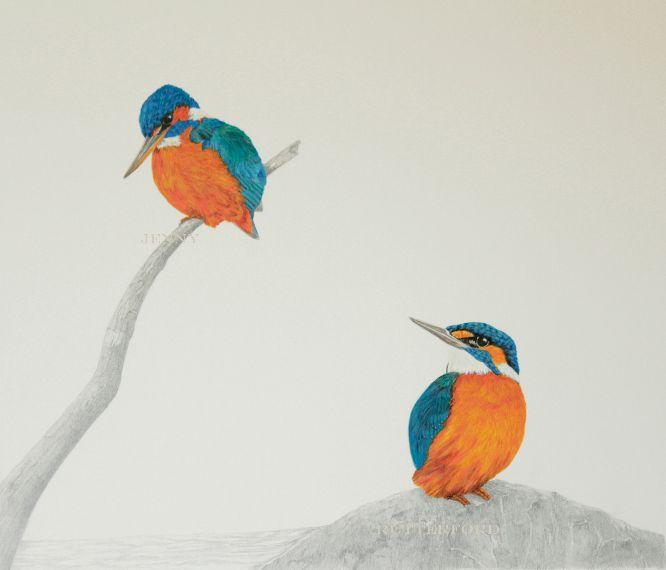 232-kingfishers