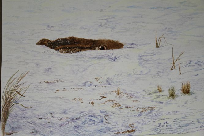 243 hare in snow