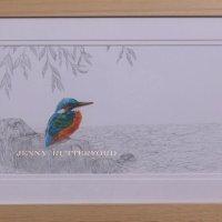 256 kingfisher