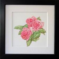 504 rose
