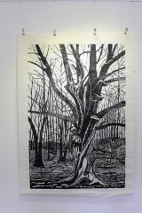 Large Twisted Beech woodcut