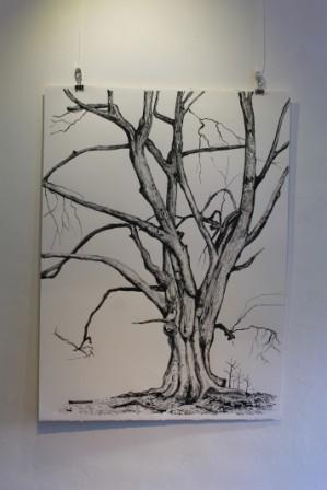 Hassan's beech ink drawing (SOLD)