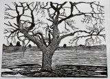 Field Ash woodcut