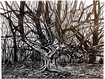 Frithsden Great Beech Woodcut