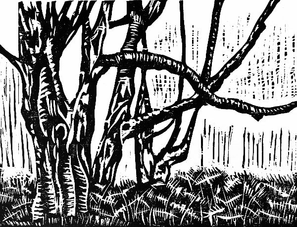 Small woodcut 22 Cold Harbour Birches