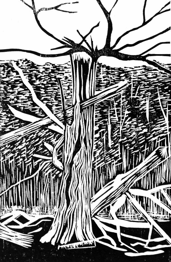 Small woodcut 25 Splintered TYree