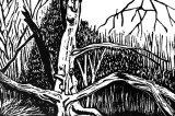Small woodcut 28 Splayed Beech