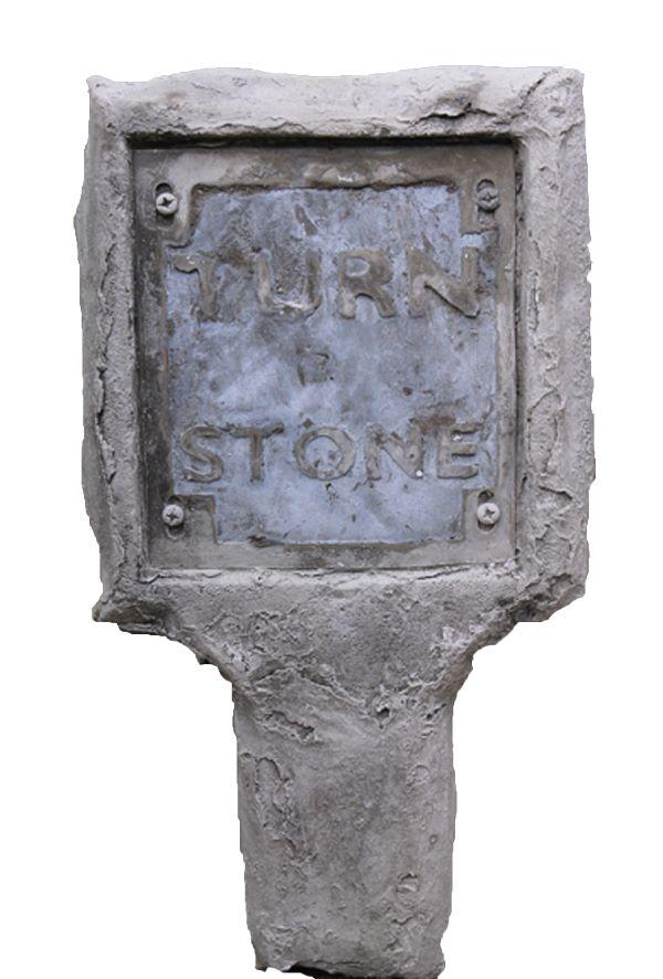 White turnstone