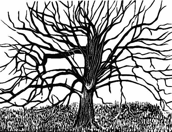 Woodcut 14 Park Hornbeam