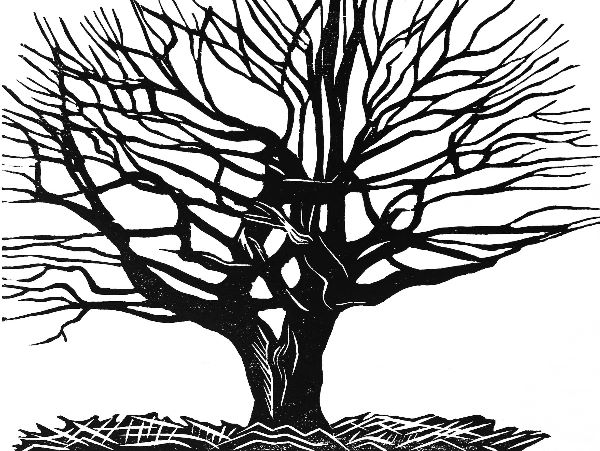 Woodcut 15 Hedge Oak