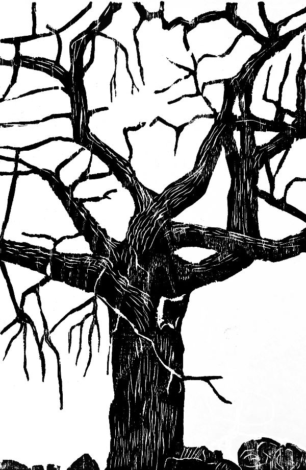 Woodcut 16 White Hill oak
