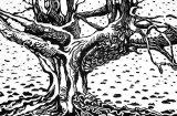 Woodcut 1 great Beech 1