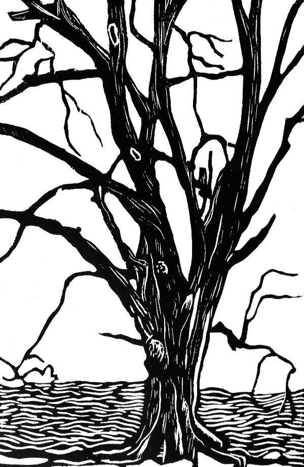 Woodcut 20 Hassan's beech