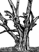 Woodcut 23 Aldbury Common Beech