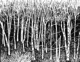 Woodcut 31 Brich edge