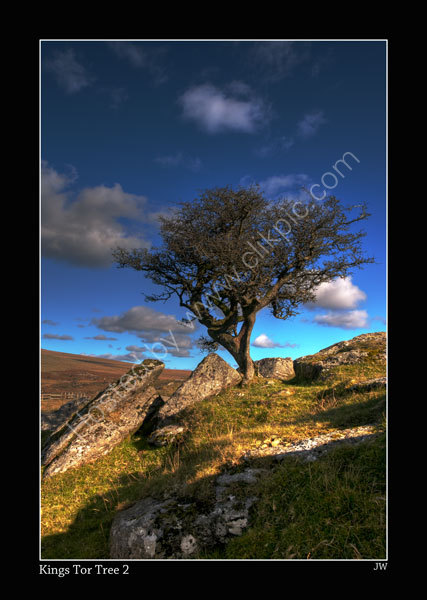 KINGS-TOR-TREE-2-600