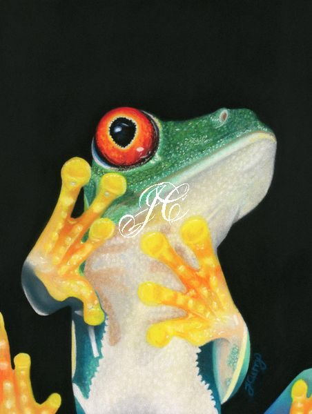Red-eyed Tree Frog Painting