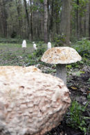 Fungi Sculpture: Holt Country Park