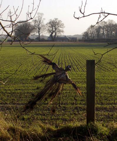 Pheasant: Marriott's Way Sculpture Trail 2008