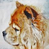 A thoughtful Chow Chow