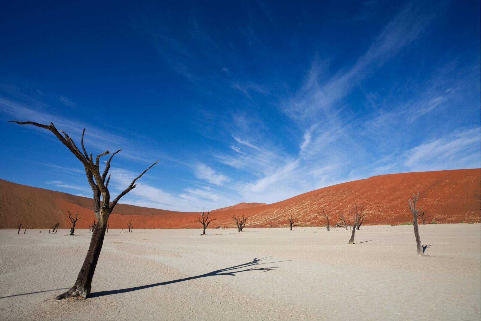 Dead Camel Thorn Trees