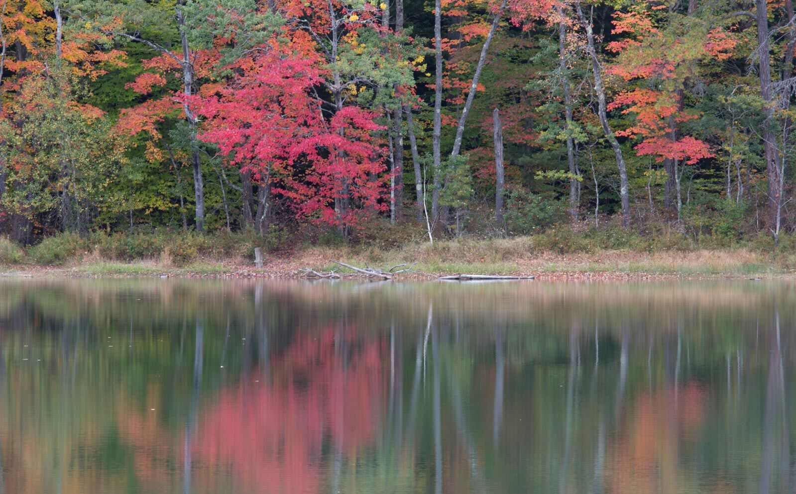 New England Reflection 1