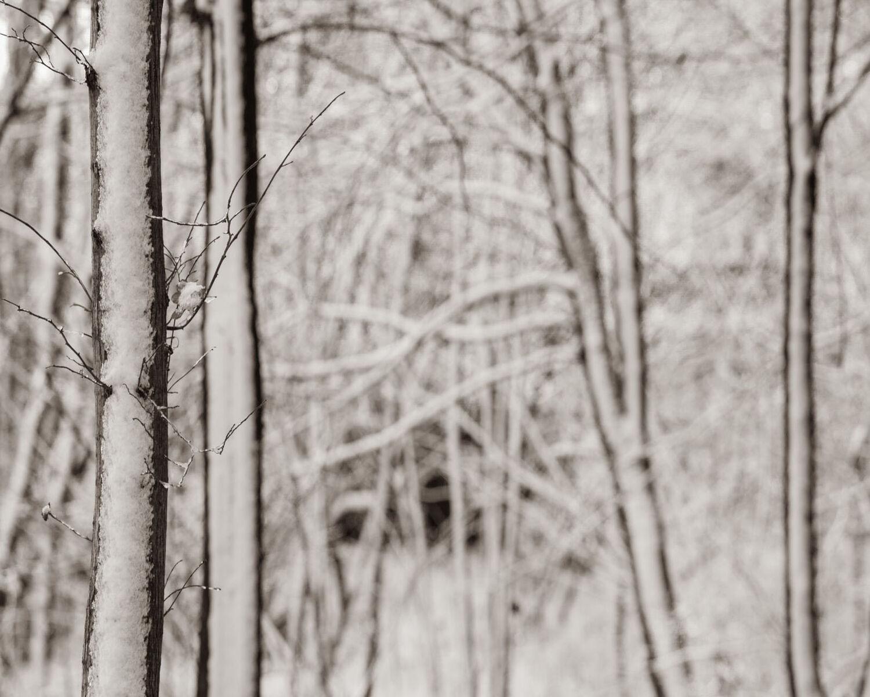 Snowy barks