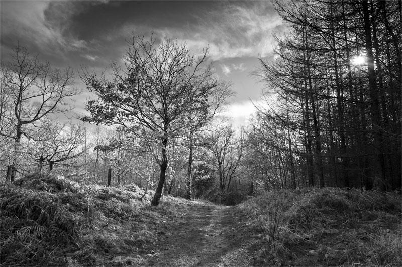 Kinsley Wood, Knighton, Powys, Wales