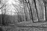 Kinsley Wood, Knighton, Powys