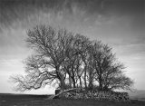 Copse Orleton Fell Westmorland
