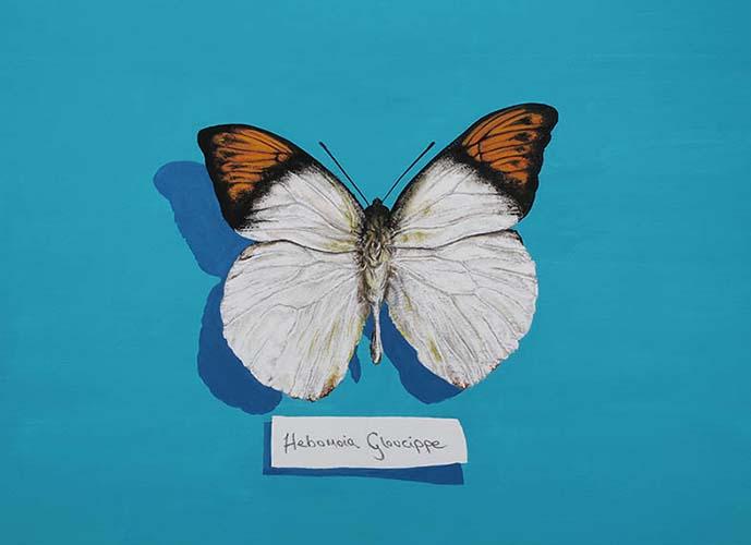 Hebomoia Gloucippe (Orange Tipped)