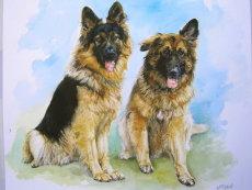 Commissions: -            -Pets & Horses