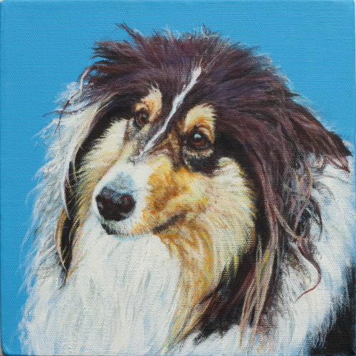 Sheltie Painted on 3D canvas 20cms x 20cms