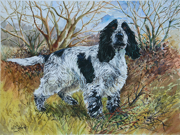 Commission painting of Spaniel