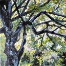 Canopy I