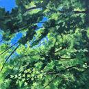 Canopy VI