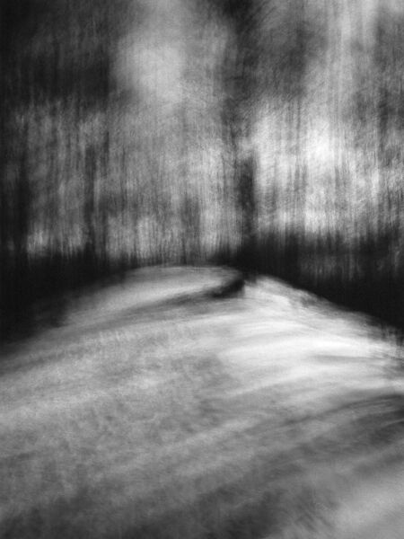black and white photographic landscape images of forest in Waterloo, Ontario using ICM, intentional camera movement