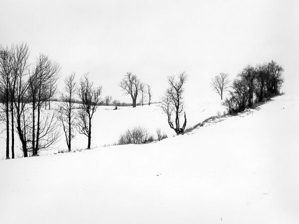 Black and white winter landscape photographic art of snow, fields and trees in Waterloo, Ontario.