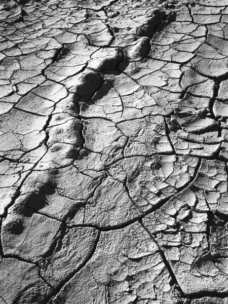 abstract black and white photographic art of dried, fractured mud in Waterloo, Ontario