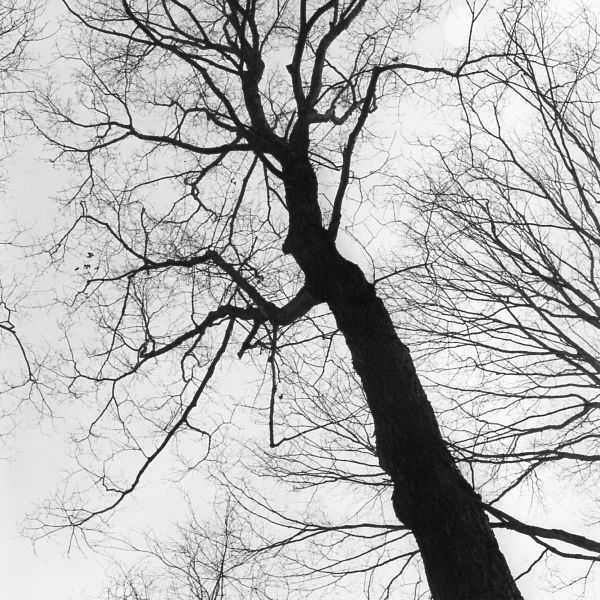 black and white photographic art of tree top figures in Waterloo Ontario