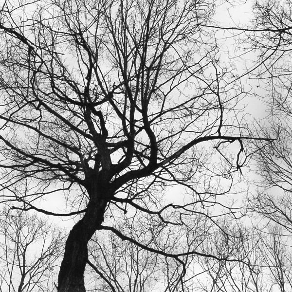 black and white photographic nature art of tree top figures in Waterloo Ontario