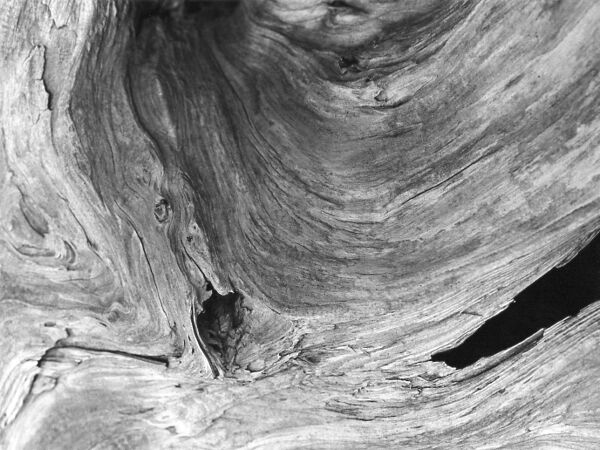 abstract black and white photographic art of tree stump in waterloo, ontario