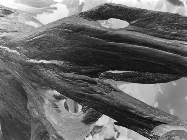 black and white reverse photographic nature art of tree stumps on reservoir bottom in Waterloo Ontario