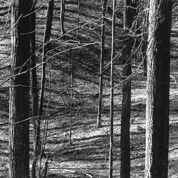 abstract black and white forest landscape photographic art in Waterloo, Ontario